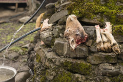 Sheep Head and Hoofs Beside the Water Area. Outdoor Stock Images