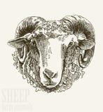 Sheep head Royalty Free Stock Photos