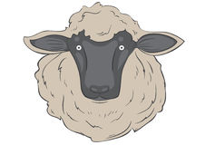 Sheep. Head sheep on the white background Stock Images