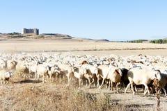 Sheep herd Stock Photo