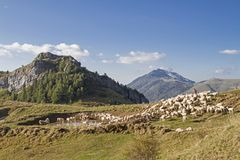Flock of sheep in the Monte Baldo area Stock Photography