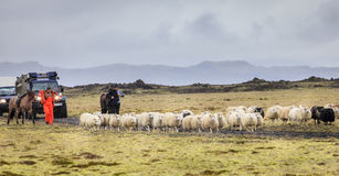 Sheep herding Stock Images