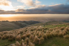 Sheep on highland pasture on sunset Royalty Free Stock Images