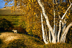 Sheep on the hill Royalty Free Stock Photography