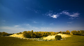 Sheep on the hill Stock Photos