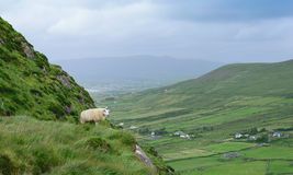 Sheep on the hill Royalty Free Stock Images