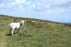 Sheep on a hill Stock Photos