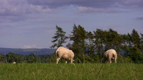 Sheep in the hills Stock Images