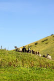 Sheep on hillside Stock Photography
