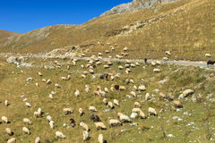 Sheep on hillside Stock Image