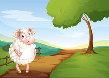 A sheep holding an empty signboard at the road Stock Images