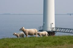 Sheep beside huge windmill in the sea Royalty Free Stock Photos