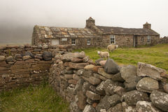 Sheep and hut on an Orkney island Royalty Free Stock Photos