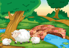 Sheep. Illustration of sheep in field Stock Photo