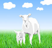 Sheep illustrations Stock Photography