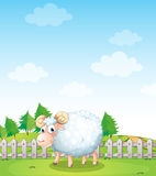 A sheep inside the fence. Illustration of a sheep inside the fence Stock Image