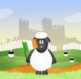 Sheep with Irish flag Stock Image