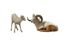 Sheep isolated. A isolated picture of mother and baby dals sheep Stock Photography