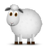 Sheep isolated on white background. Royalty Free Stock Photo