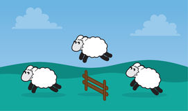Sheep Jumping Fence in Field. Sheep jumping over a fence in a grassy field Stock Photos