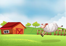 A sheep jumping in front of a barn Stock Photo