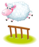 A sheep jumping Royalty Free Stock Photo