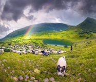 Sheep Lake in the Carpathians Vorozheska royalty free stock photo