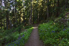 Sheep Lake Trail in Mt Rainier NP Royalty Free Stock Photography