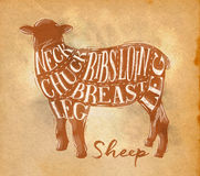 Sheep lamb cutting scheme craft Stock Image