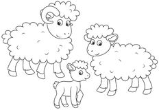Sheep, lamb and ram. A funny family of sheep, a black and white vector illustration in cartoon style for a coloring book royalty free illustration