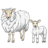 Sheep and Lamb, Vector Illustration. On White Background Royalty Free Stock Image