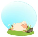 Sheep and laptop Royalty Free Stock Photography