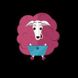 Sheep with laptop Stock Photo