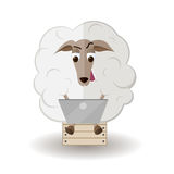 Sheep with laptop Stock Image