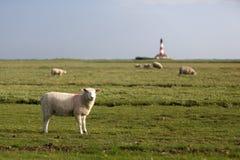 Sheep + Lighthouse Royalty Free Stock Photos