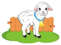 Sheep live on farm Royalty Free Stock Image