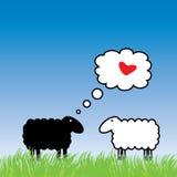 Sheep in love. Black sheep fall in love Stock Image