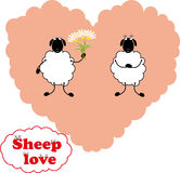 Sheep love Royalty Free Stock Images