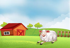 A sheep lying on the farm with a barn Stock Photo
