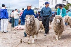 Sheep at Market Stock Photography
