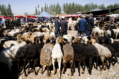 Sheep market in XinJiang of China. Several people are talking about sheep sales.Photo shooten in XinJiang of China,May 24th,2011 Royalty Free Stock Photo