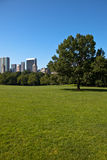 Sheep Meadow Royalty Free Stock Image