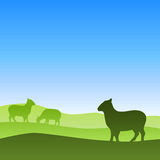 Sheep meadow silhouette landscape nature illustration Royalty Free Stock Images