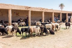 Sheep Merchants Sitting at the Sheep Market in Rissani Stock Photo