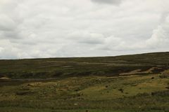 Sheep on moorland. Sheep grazing on baron moorland of browns and greens heath and bracken under cloudy skies royalty free stock photos