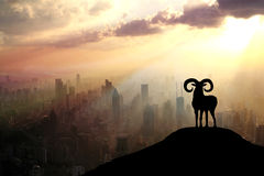 A sheep in the morning. Royalty Free Stock Images
