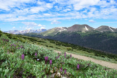 Sheep Mountain as Seen from the Ute Trail in Rocky Mountain National Park. Elephant head flowers in the foreground and Sheep Mountain in the background as seen Royalty Free Stock Image