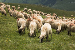 Sheep on the mountain Royalty Free Stock Photography