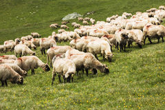 Sheep on the mountain Royalty Free Stock Images