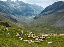 Sheep on the mountain Stock Photography